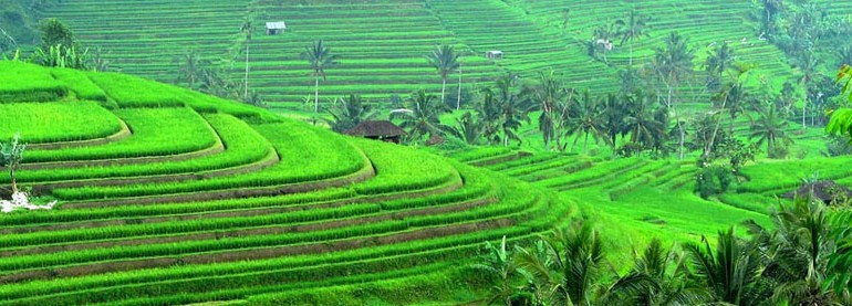 rice-terrace-tour-05